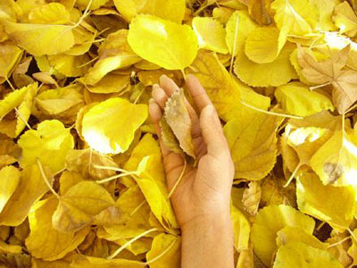 Nắm lá trong tay